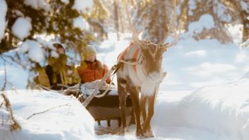 picture Reindeer Farm Lapland Travel Äkäslompolo