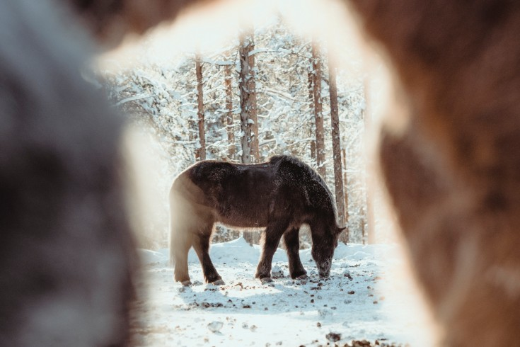 picture of northernlightshorsesleigh